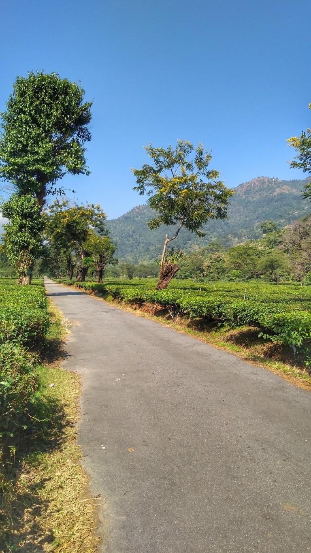 Tea Gardens in Alipurduar